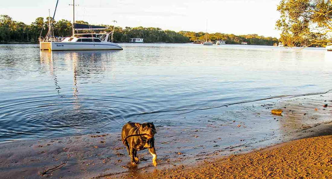 House Sitting Noosa